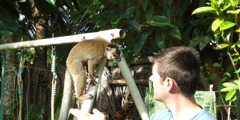 le lémurien et l'homme