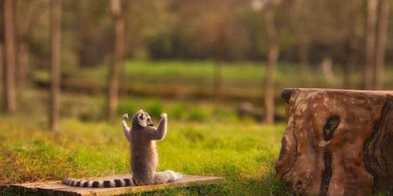 lémuriens mohéli babeldoor