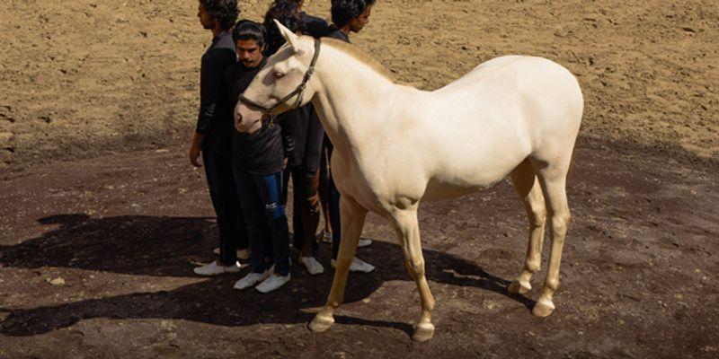 Préparation au spectacle avec les chevaux