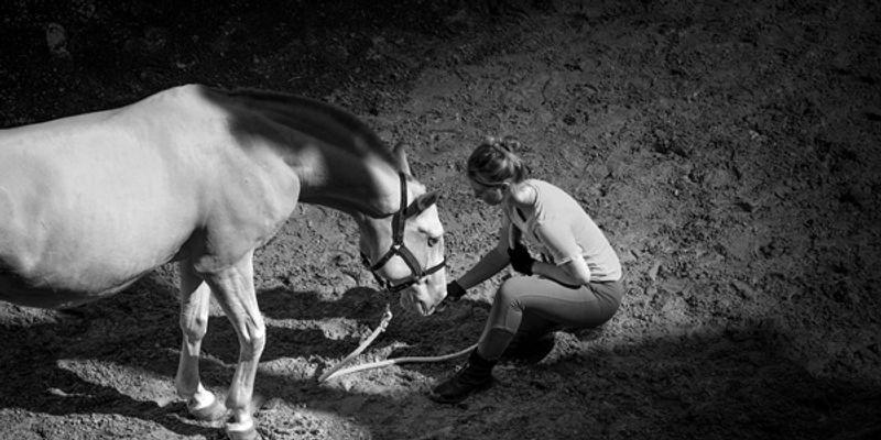 Ecuyer prenant soin de son cheval