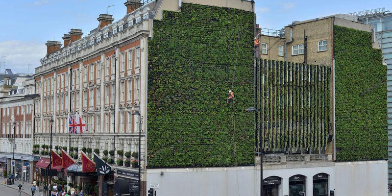 Le mur vivant de Londres