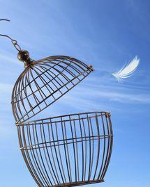 cage oiseau plume
