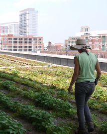 Chicago, espaces verts sur les toits