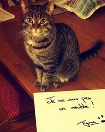 animaux je ne suis pas un meuble twitter