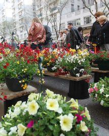 marché aux plantes villeurbanne
