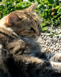chat soleil félin