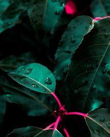Goutte de pluie sur feuille d'arbre