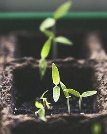 Meilleures box jardinages bio