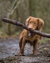 naturopathie vétérinaire