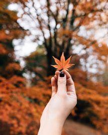 8 rituels à pratiquer pour l'automne