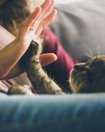 10 erreurs à ne pas commettre avec son chat