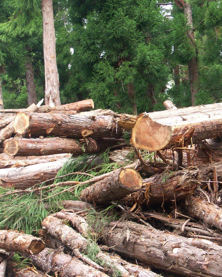 La déforestation considérée comme un écocide