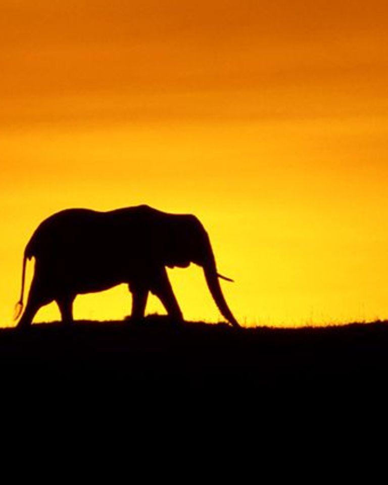un jour sur terre éléphants