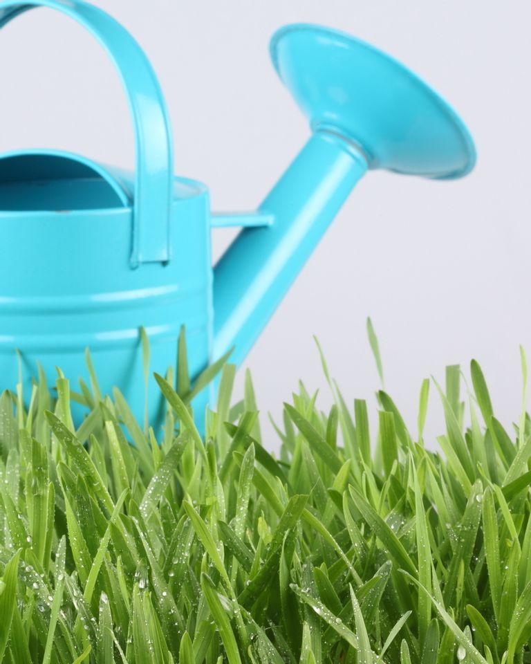 arrosoir pelouse
