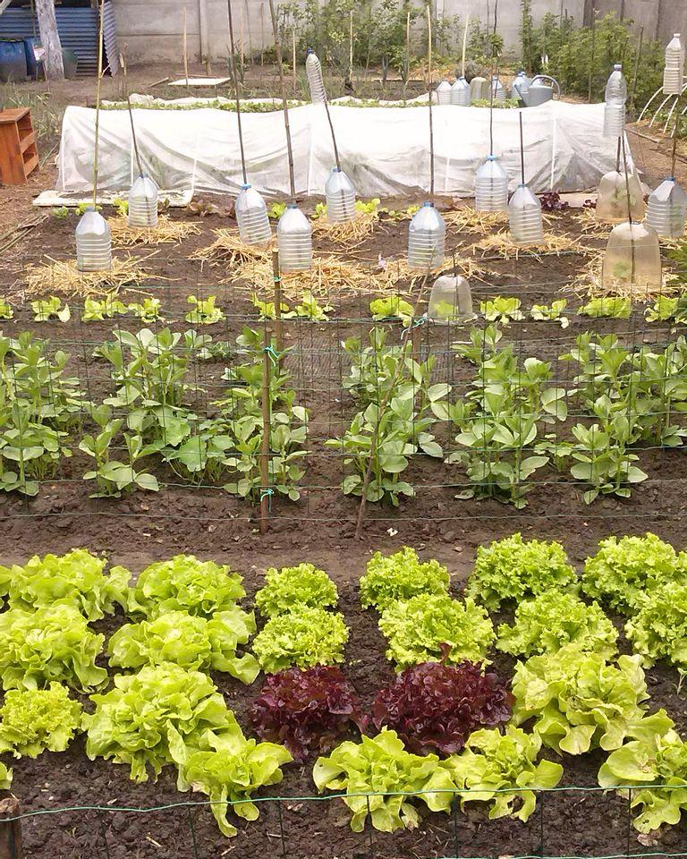jardin pret savez vous planter chez nous