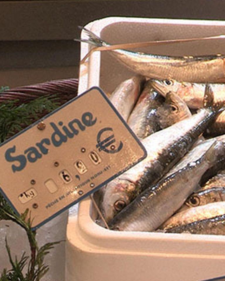 poisson sardines enquête france 5