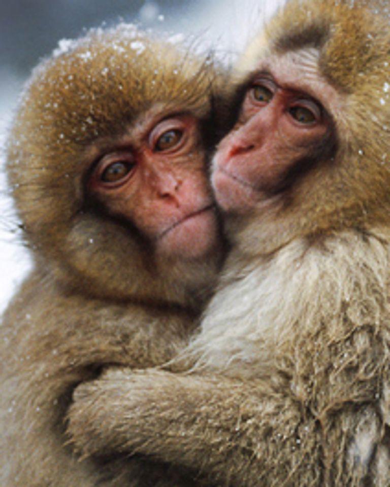 singe protection animale expérimentation