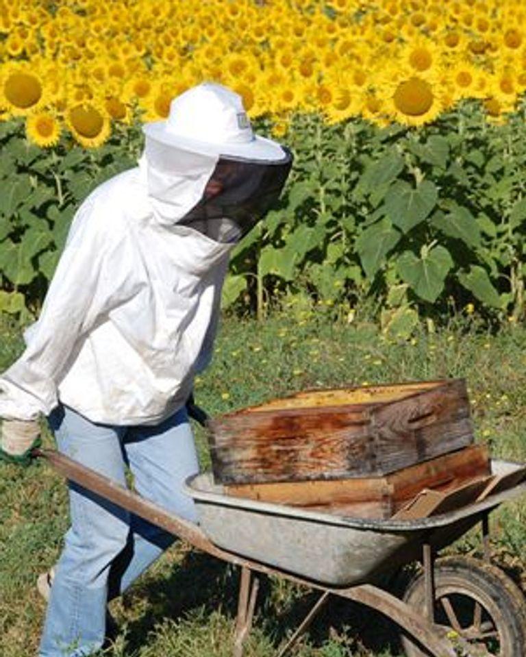 Erik apiculteur amateur