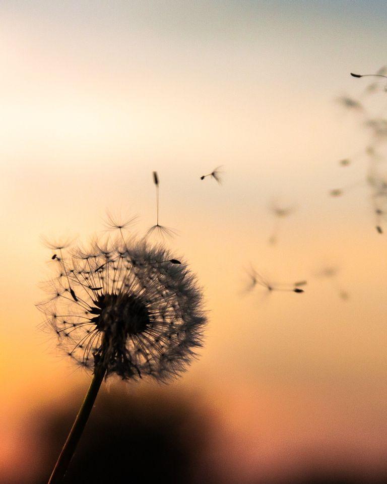 fleur, coucher de soleil