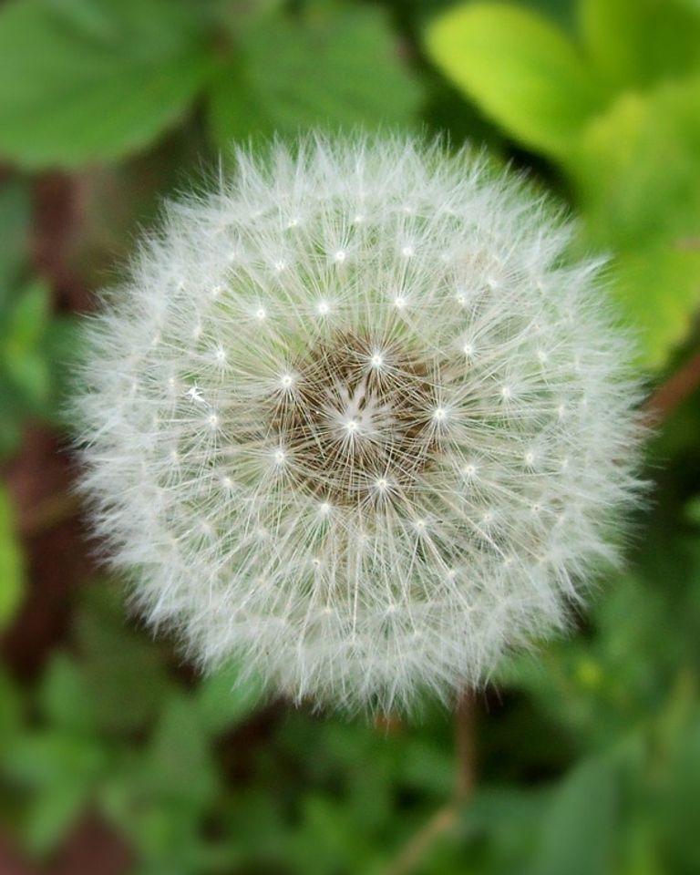 Allergies au pollen : comment les prévenir et les soigner naturellement ?