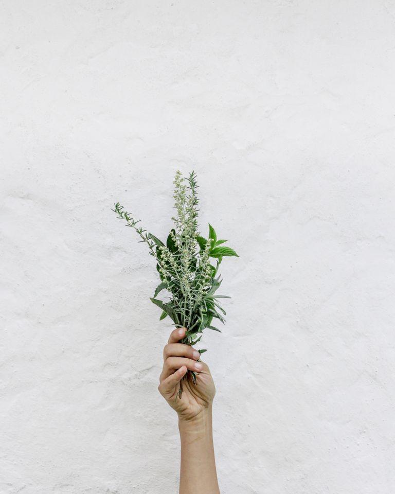 Cure detox : 7 plantes remèdes pour le printemps