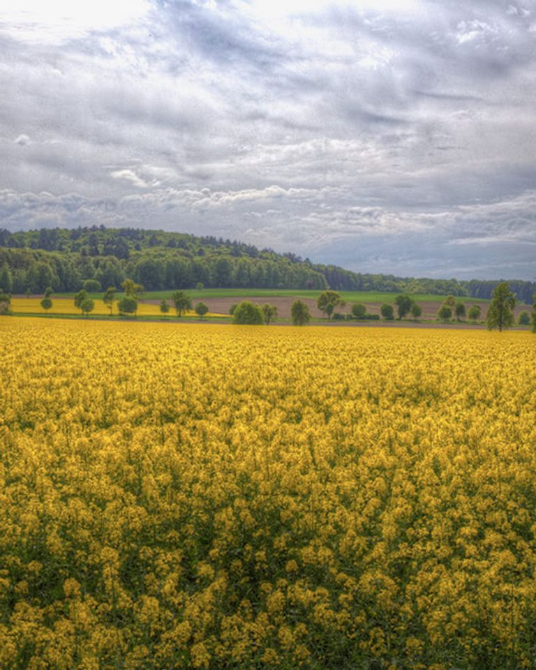 Allergie au pollen et réchauffement climatique : la situation empire