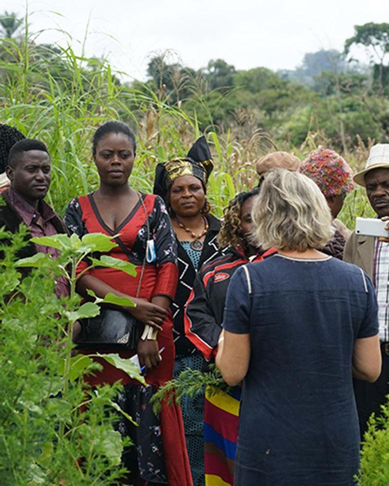 Paludisme : lancement d'alerte pour l'Artemisia