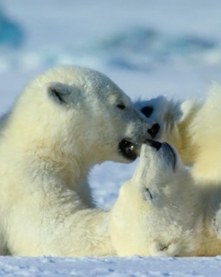 """""""Notre planète"""", la série documentaire à ne pas rater sur Netflix"""