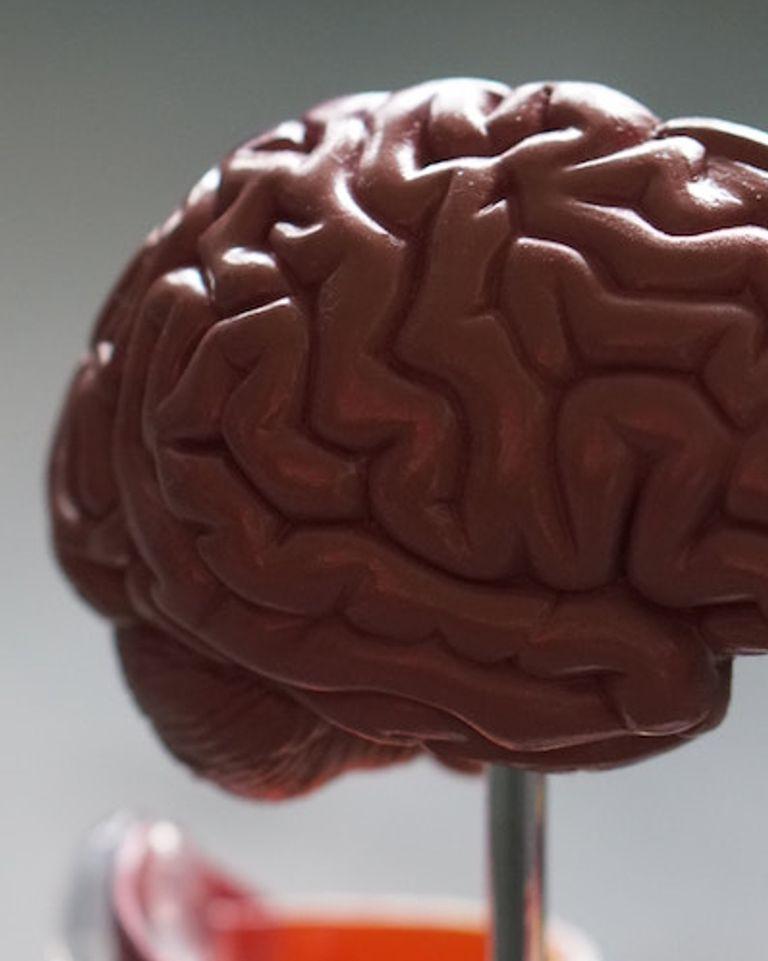 bien nourrir son cerveau arte