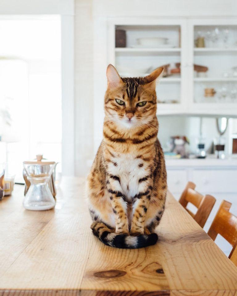 Comment les chats vous protègent vous et votre habitation.