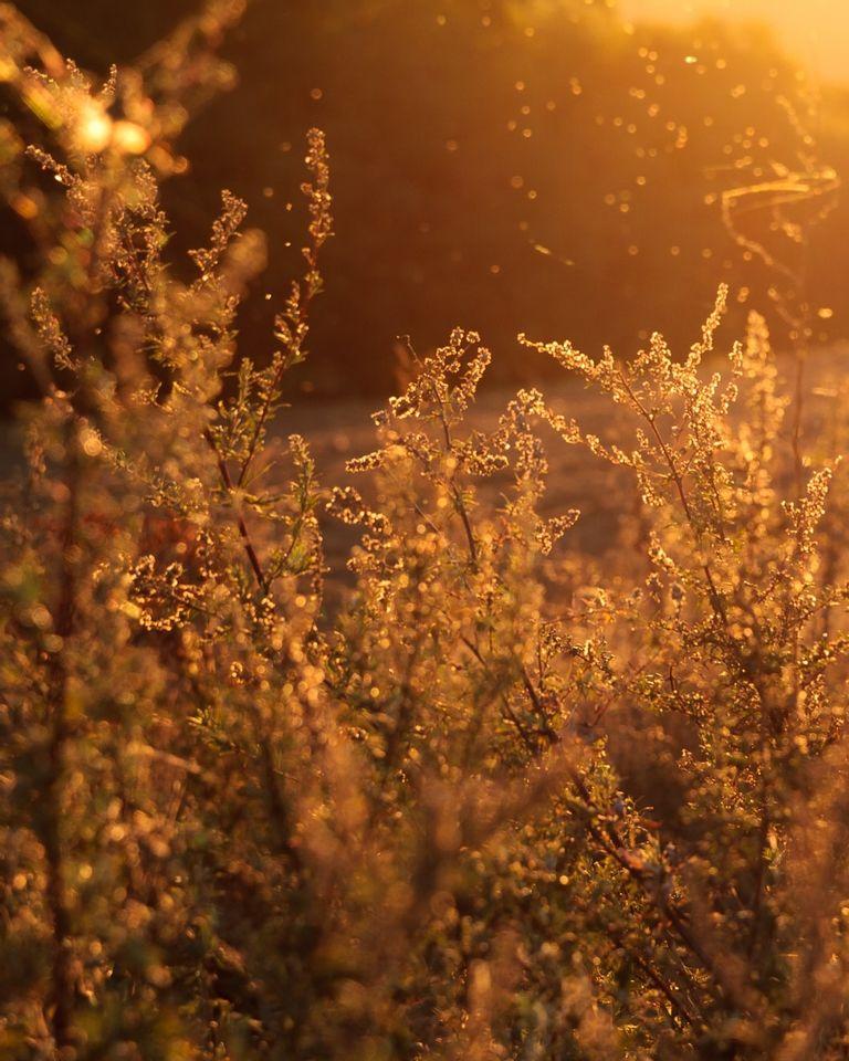 Allergies : 3 façons d'utiliser les huiles essentielles pour soulager ses crises
