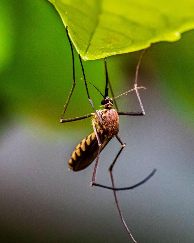 Moustiques tigre : point sur leur prolifération et comment y faire face
