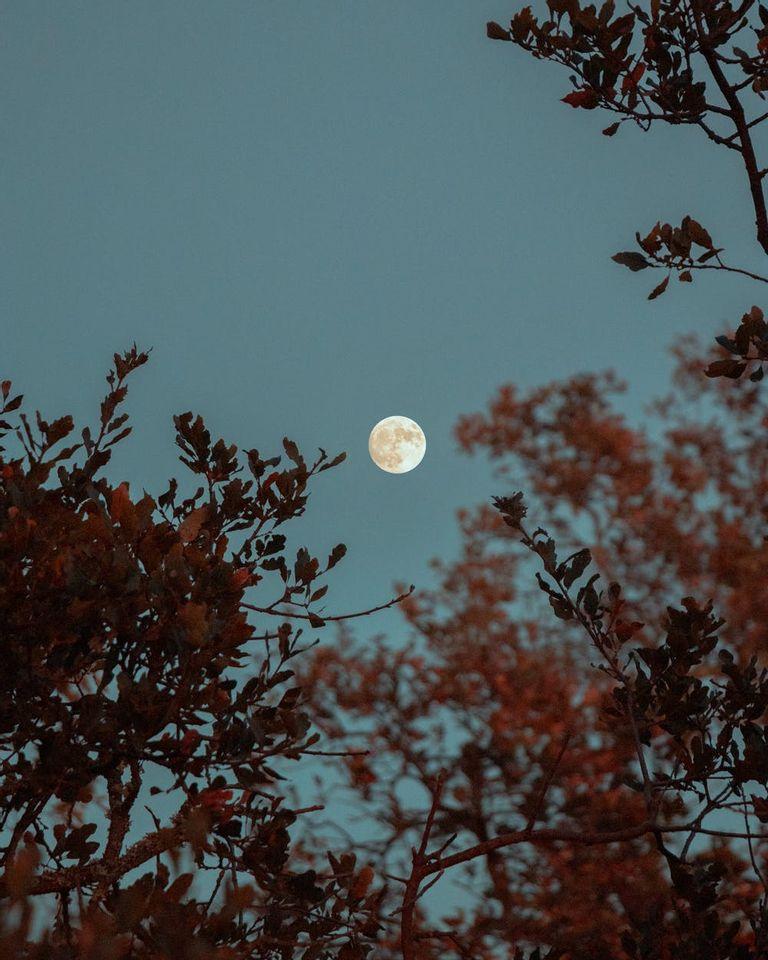 lune plantes