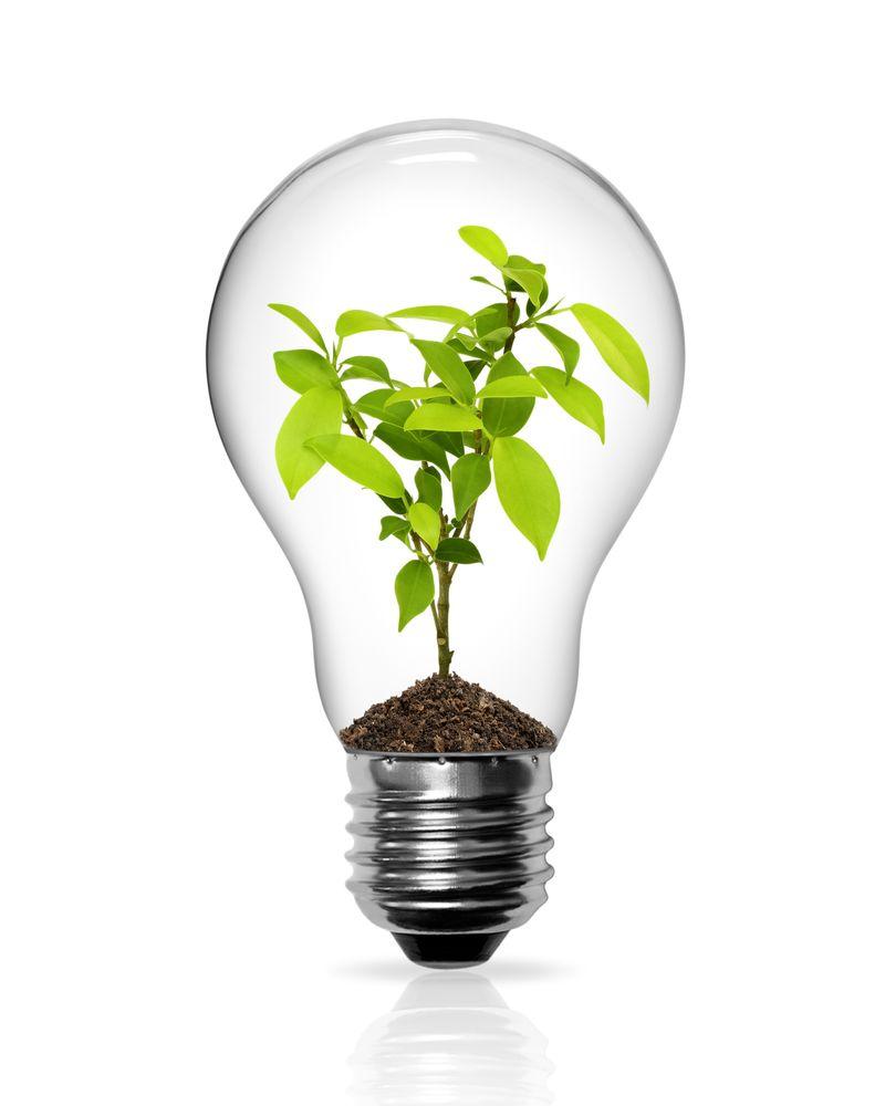 economie energie ampoule plante