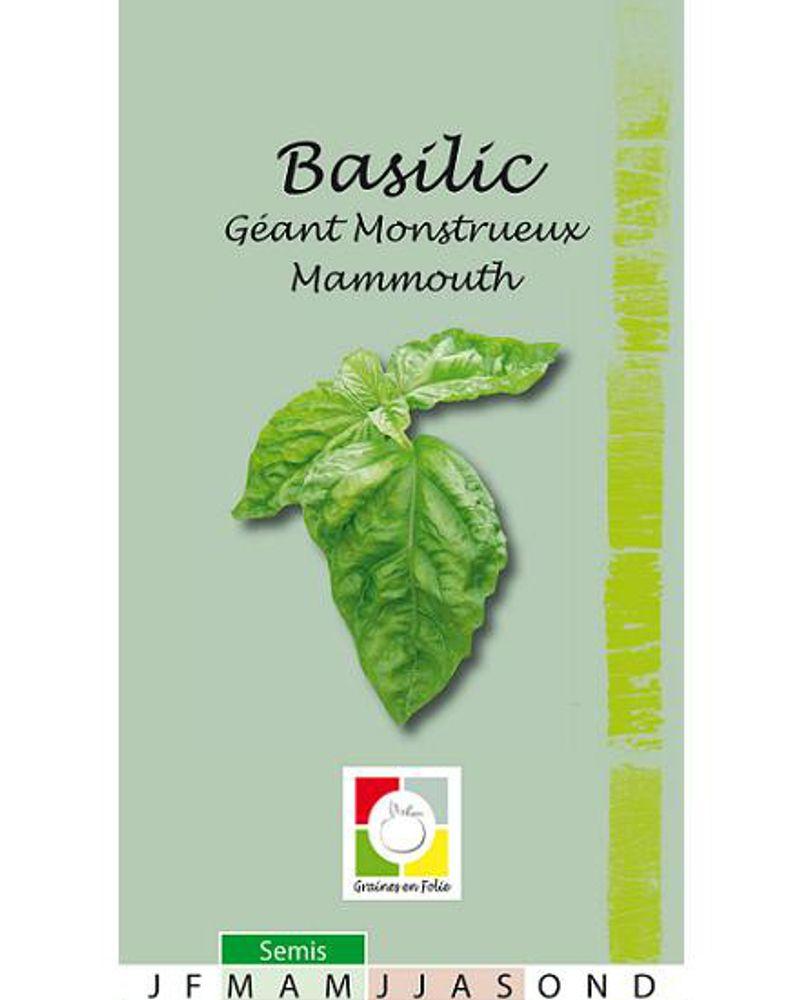 Les graines de basilic de Graines en Folie