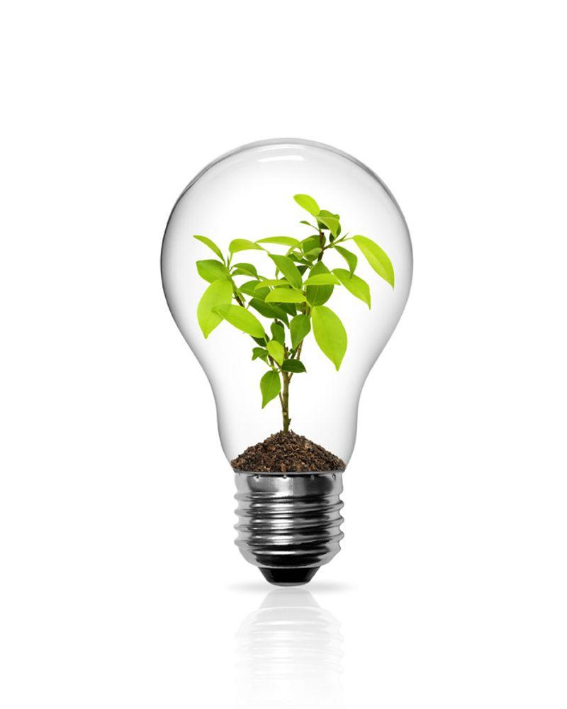 ampoule plante economie energie