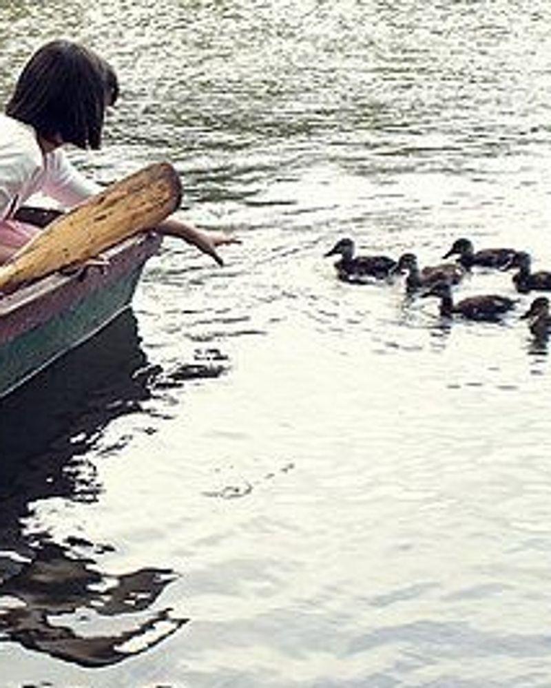 Lac des Minimes balade