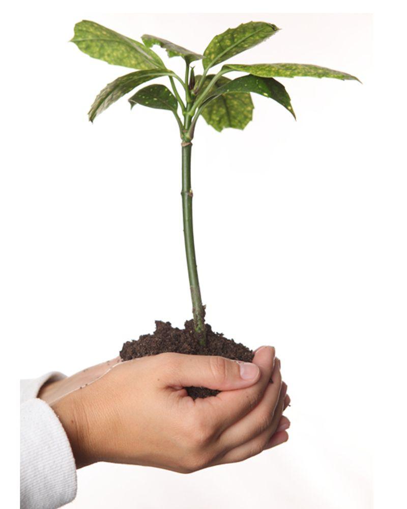 main plante terre