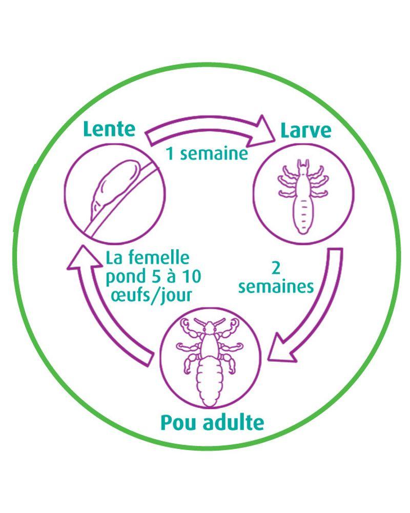 cercle poux