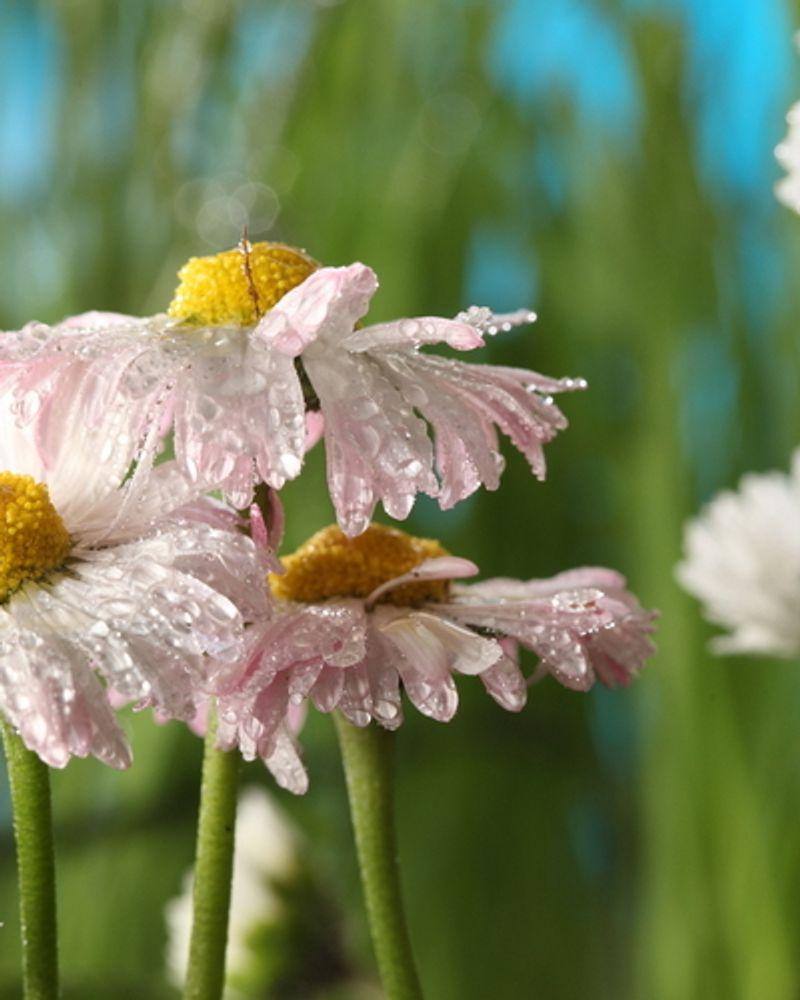 champ bio fleur