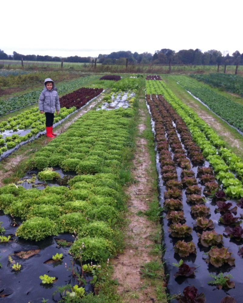 amap production légumes paris
