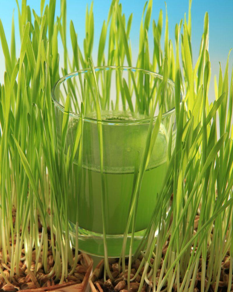 jus herbe blé vert