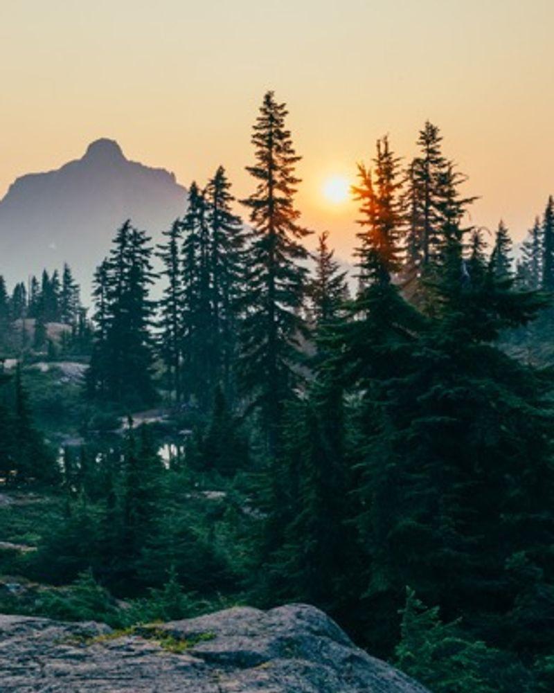 Forêt crepuscule aube