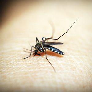 Moustiques : 5 huiles essentielles pour les éloigner et apaiser leurs piqures