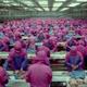 Surconsommation : de l'animal au supermarché