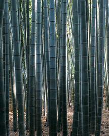 La vérité sur les vêtements en bambous :
