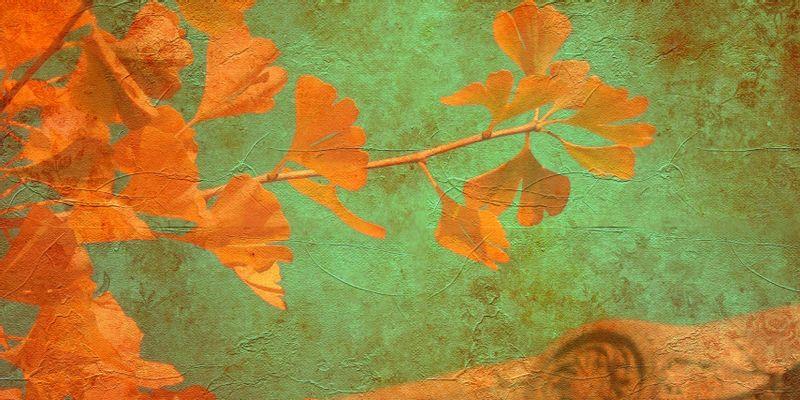 Feuilles de ginkgo, l'arbre aux quarante écus