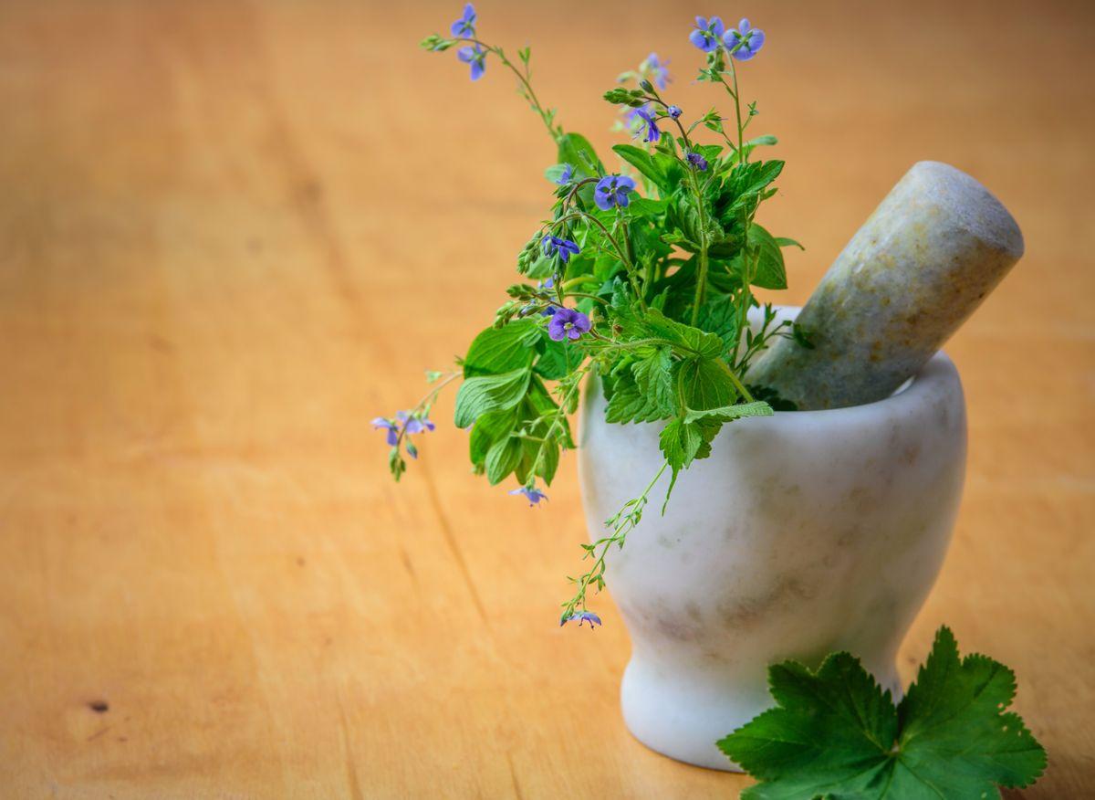 Stress et fatigue : les bienfaits des plantes adaptogènes