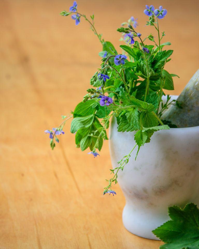 Stress : les bienfaits des plantes adaptogènes