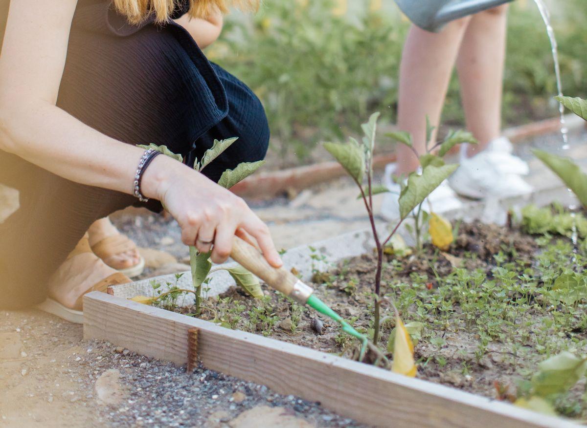 Légumes et fleurs : quels semis au mois de mai ?